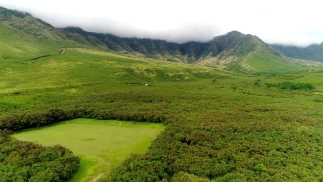 a drone flies over green fields near mountains in honolulu hawaii - honolulu stock videos and b-roll footage