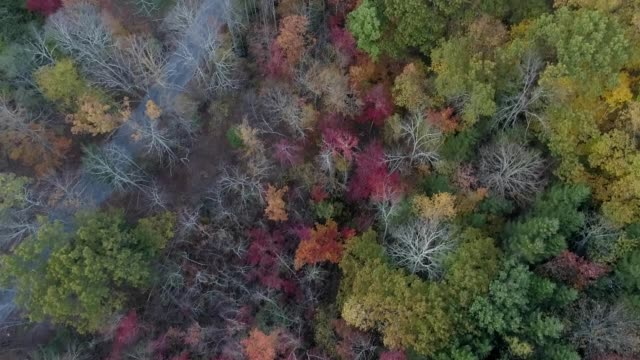 a drone flies over hudson valley fall foliage and a country road - hudson valley stock videos and b-roll footage