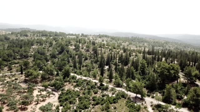 a drone flies over pero forest in israel לטרון - israel stock videos & royalty-free footage