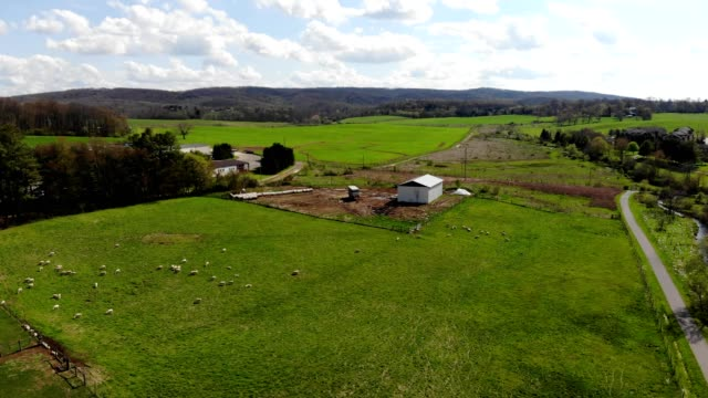 a drone flies over sheep on a farm in blacksburg virginia - hooved animal stock videos and b-roll footage