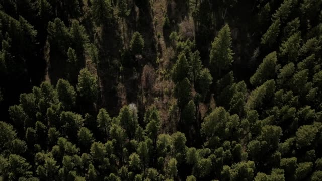 vidéos et rushes de a drone flies over the tops of a dense forest in bozeman montana - bozeman