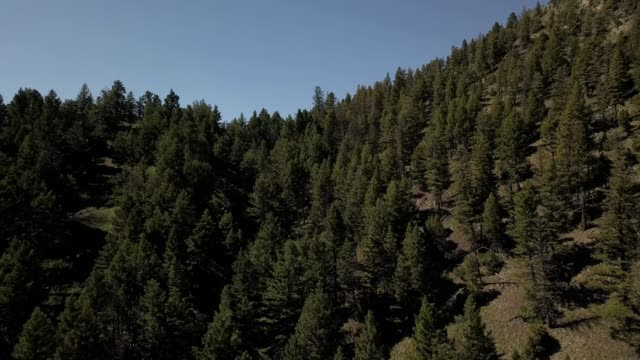 vidéos et rushes de a drone flies over treetops towards snow covered mountains in bozeman montana - bozeman