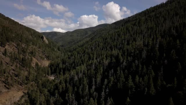 vídeos de stock, filmes e b-roll de a drone flies through a forested canyon in bozeman montana - bozeman