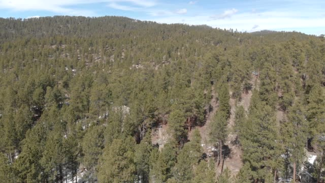 a drone flies through custer state park in south dakota - custer staatspark stock-videos und b-roll-filmmaterial