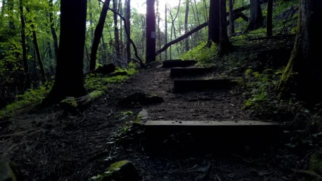 a drone flies up wooden foot steps in nantahala national forest in bryson city north carolina - sunny video stock e b–roll