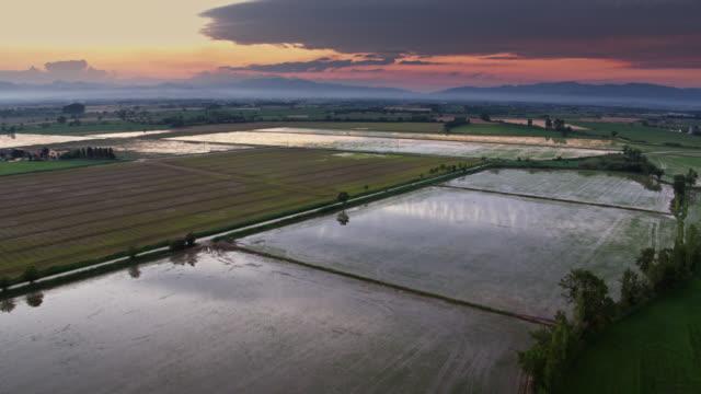 vídeos y material grabado en eventos de stock de vuelo de drones a través de campos y arrozales en el anochecer - campo de arroz