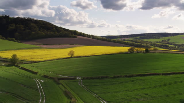 Drone Flight Across Fields of Grass and Rapeseed in England
