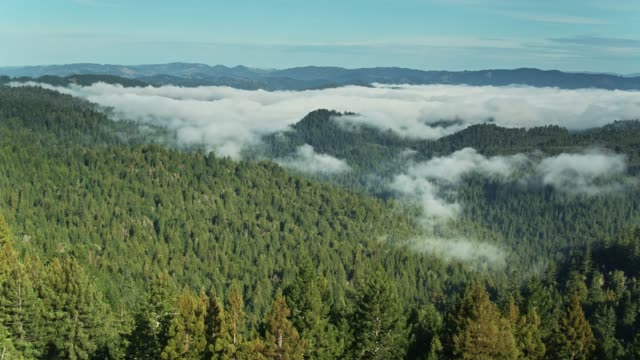 Drone Flight Across Russian River Valley Forest with Morning Fog