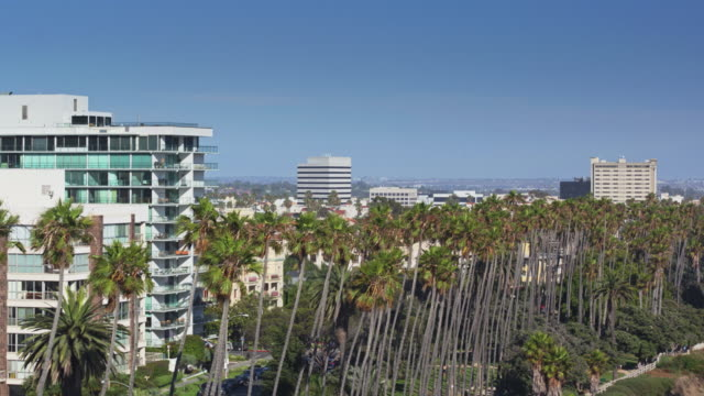 drone flight along a line of palm trees in palisades park, santa monica, ca - palisades park stock videos & royalty-free footage