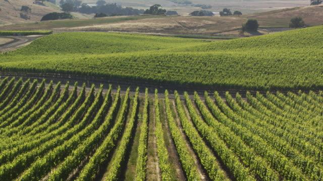 vídeos y material grabado en eventos de stock de drone flight along trellises in northern california vineyard - viña
