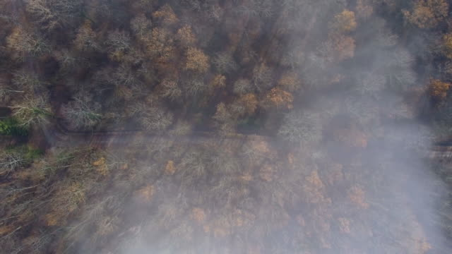 drone flight over a misty autumn forest. - timber yard stock videos & royalty-free footage