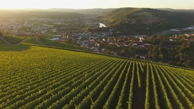 Drone flight over autumnal vineyards, Saarburg, Saar Valley, Rhineland-Palatinate, Germany