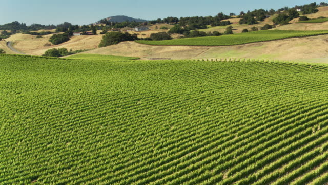 Drone Flight Over Brow of Hill in Northern California Vineyard