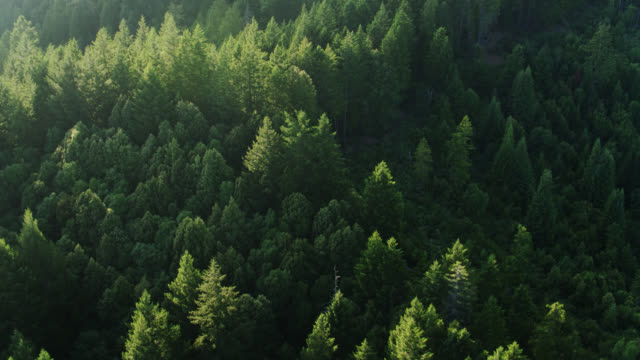 drone flight over forest - pacific coast stock videos & royalty-free footage