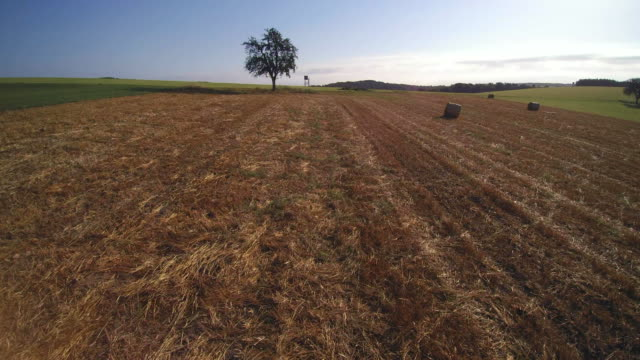 drone flight over harvested field, freudenburg, district trier-saarburg, rhineland-palatinate, germany - single tree stock videos & royalty-free footage