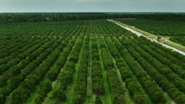 drone flight over orange trees and irrigation channel in florida citrus grove - grove stock videos & royalty-free footage