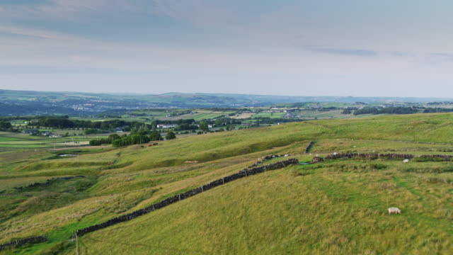 vídeos de stock e filmes b-roll de drone flight over sheep grazing on hillside in pennines - yorkshire