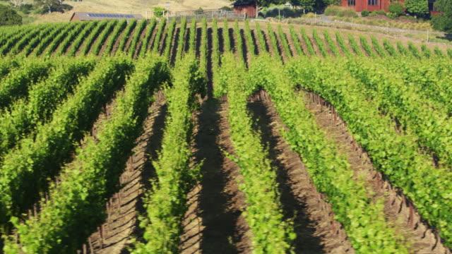 Drone Flight Over Vineyard Parallel to Trellises
