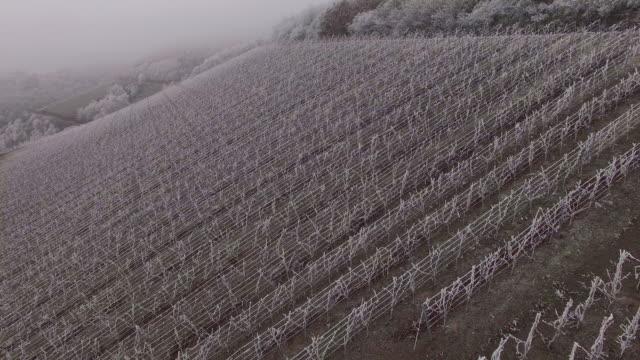 drone flight over vineyard with hoarfrost in winter, saarburg, saar valley, rhineland-palatinate, germany - saarburg stock-videos und b-roll-filmmaterial