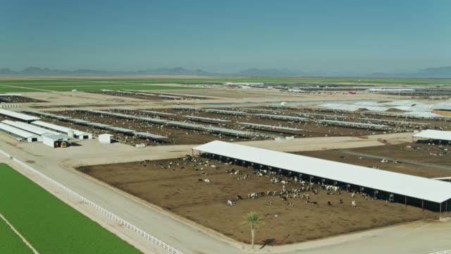 drone flight past feedlot on dairy farm in arizona - livestock stock videos & royalty-free footage