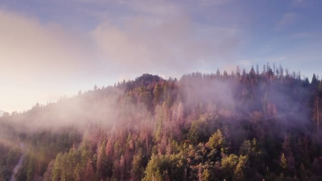 Drone Flight Through Light Cloud Over Forest