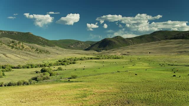 drone flight towards herd of cattle grazing in meadow in colorado - gunnison stock videos & royalty-free footage