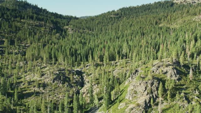 シエラのドローンフライトアップヒル - 国有林点の映像素材/bロール