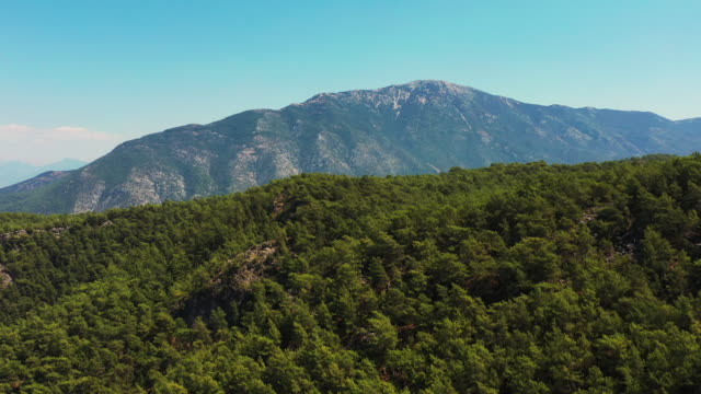 drone flying above the forest trees towards the mountains - lush foliage stock videos & royalty-free footage