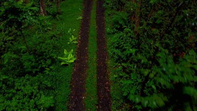 Drone Flying Above Two-Track in Remote Forest on Maui