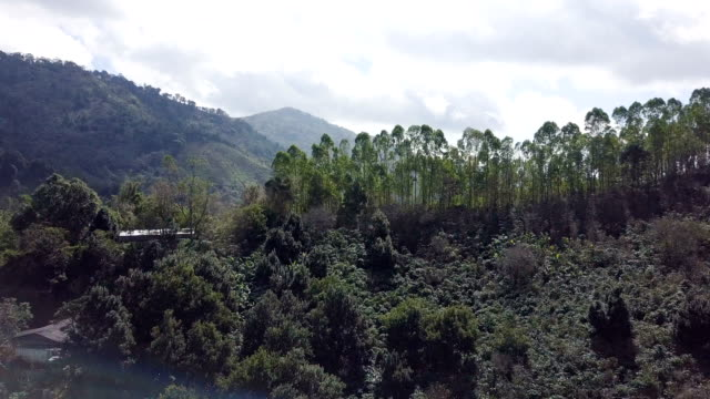 drone flying at doi chaang coffee farm. - plantation stock videos & royalty-free footage