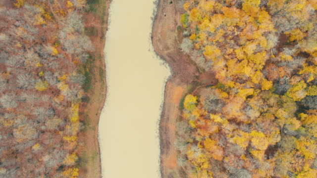 drone flying by fall leaves in forest with golden sun flare on river water - wood texture stock videos and b-roll footage