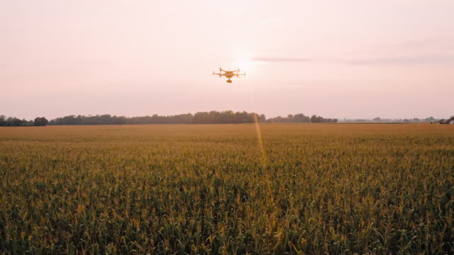 aerial drone flying over a field at sunset - farmhouse stock videos & royalty-free footage