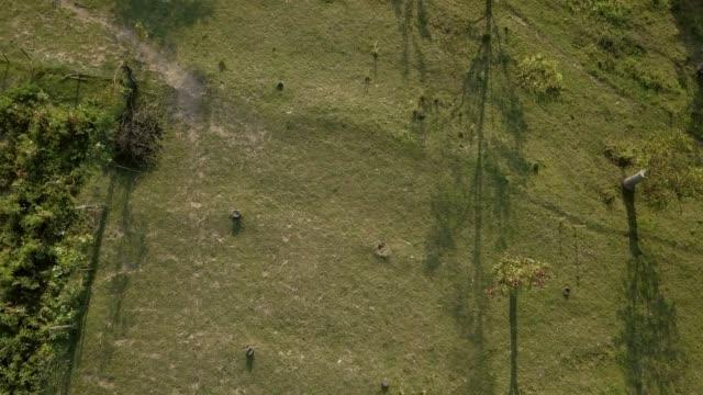 畑と牧場でフィールド上空を飛行ドローン - 平地点の映像素材/bロール