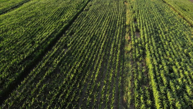 drone flying over corn field - motorway junction stock videos & royalty-free footage