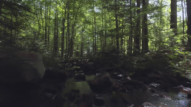 drone flying over creak filled with rocks in the middle of a lush forest - woodland stock videos & royalty-free footage
