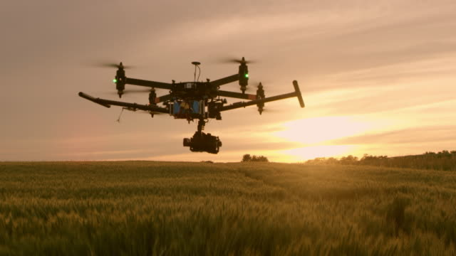 ws drone flying over field of wheat at sunset - quadcopter stock videos & royalty-free footage