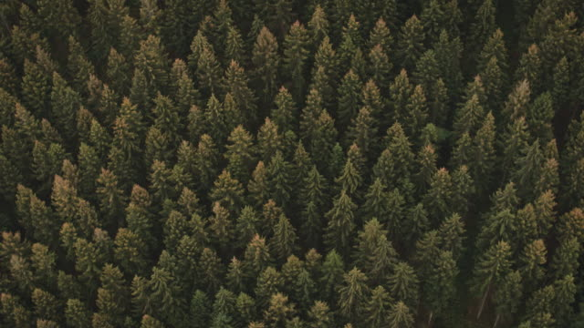 drone flying over forest - industria forestale video stock e b–roll