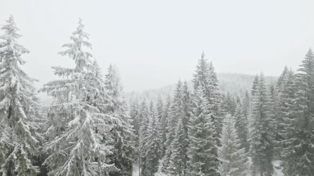 Drone flying through snow covered forest