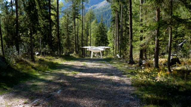 A drone fly's down a path in a lush pine green forest. The drone fly's directly away from the camera down the alpine path and slowly disappears out of sight.
