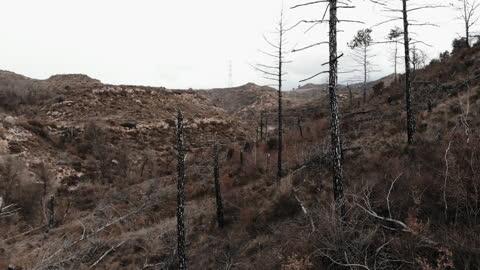 vídeos y material grabado en eventos de stock de drone footage flying between burned forest and the remains of death trees. bosque quemado a vista de drone en el corazon de cataluña. - pino conífera