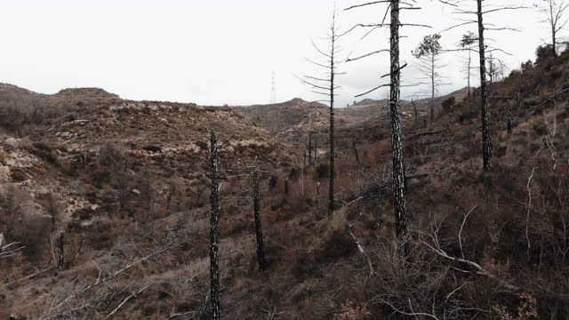 drone footage flying between burned forest and the remains of death trees. bosque quemado a vista de drone en el corazon de cataluña. - bare tree stock videos & royalty-free footage
