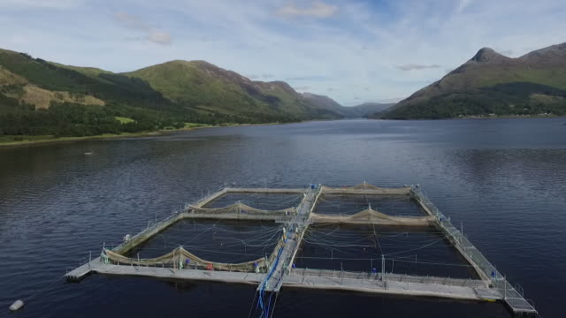 Drone footage of a salmon fishing platform