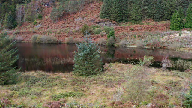 drone footage of a small loch in a forest in rural scotland - piccolo video stock e b–roll