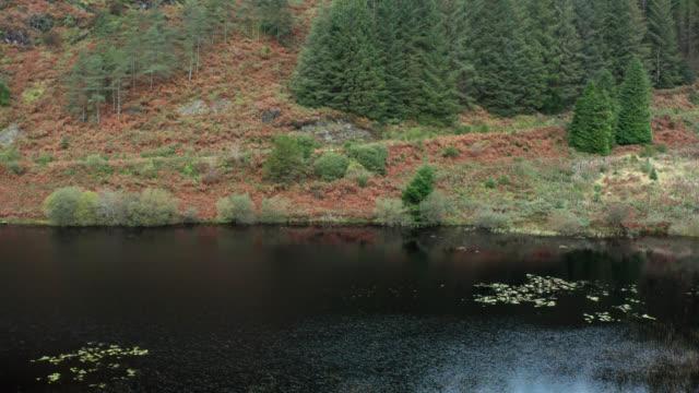 vídeos y material grabado en eventos de stock de imágenes de drones de un pequeño lago situado junto a una zona de bosque en la escocia rural - pinar