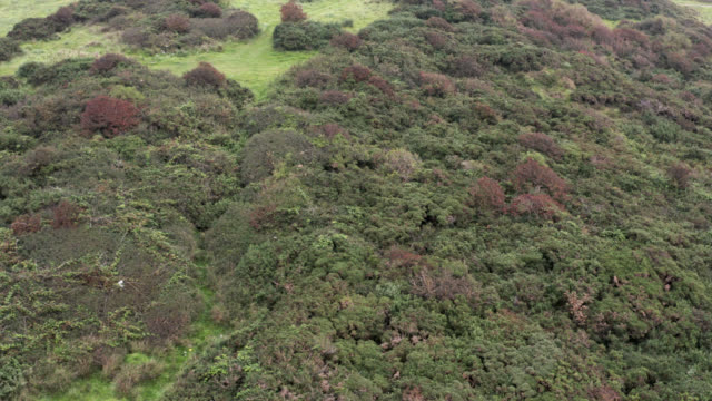 drone footage of an area of ground covered in gorse - johnfscott stock videos & royalty-free footage
