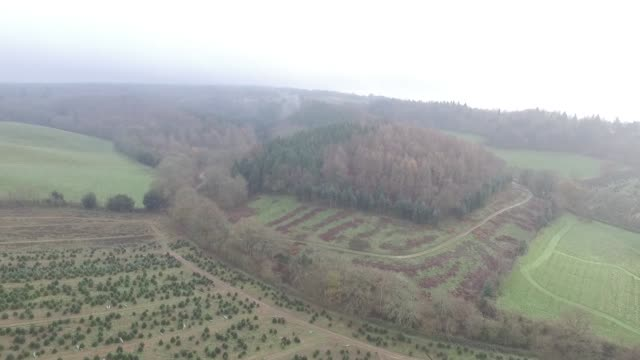 Drone footage of Christmas trees ready for harvest at Santa Fir Christmas Tree Farm near Guildford UK on Monday Dec 7 2015