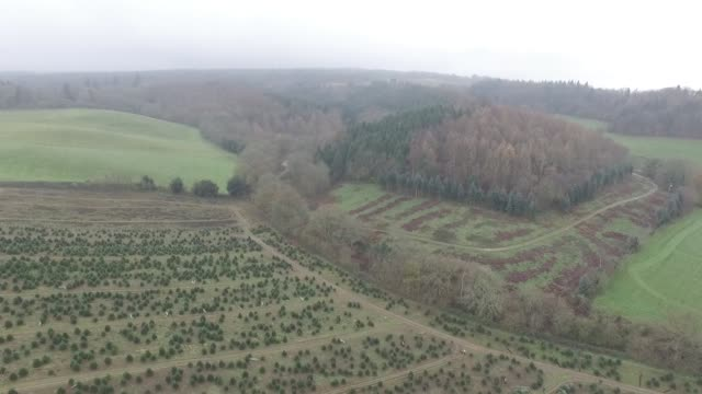 Drone footage of customers selecting Christmas trees at Santa Fir Christmas Tree Farm near Guildford UK on Monday Dec 7 2015
