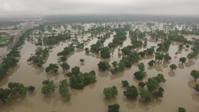 Drone footage of deer wading through deep floodwaters at Bear Creek Park along Highway 6 from Clay Road to Interstate 10 The Addicks Reservoir...