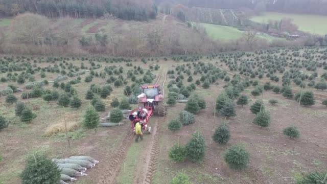 drone footage of employees netting harvested trees at santa fir christmas tree farm near guildford uk on monday dec 7 2015 - guildford stock videos and b-roll footage