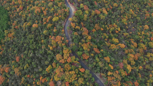 drone footage of fall foliage and a mountain road - mountain road stock videos & royalty-free footage